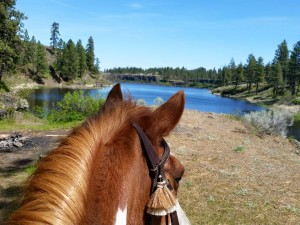 cowboy looking at fishlake